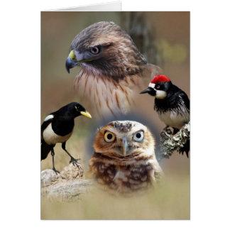 Love Bird Gifts - Jersey - Home | Facebook