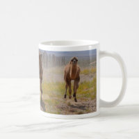 Three young camels mug