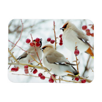 Sviristeli On Feeding Rectangular Photo Magnet