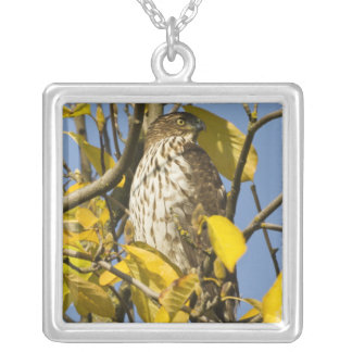 Swainson's hawk at Lan Su Chinese Garden 2 Silver Plated Necklace