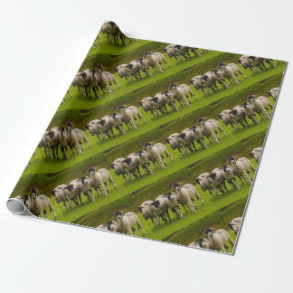 Swaledale Sheep Wrapping Paper