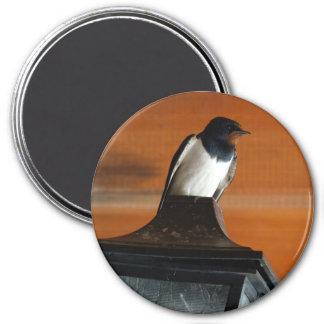 Swallow Bird on Lamp Photo  Round Magnet