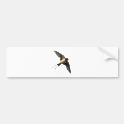 Swallow Clear Bumper Stickers