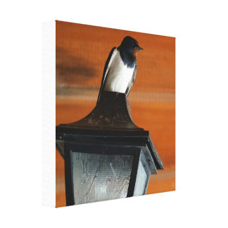 Swallow on a Lamp Photo  Single Print Canvas