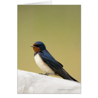Swallow on a Wooden Ledge Card
