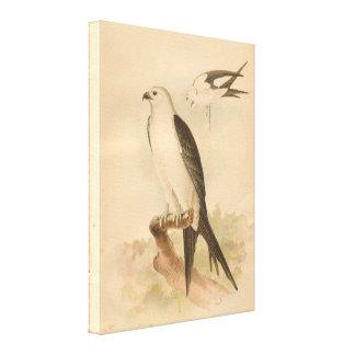 Swallow Tailed Kite Vintage Wrapped Canvas Print