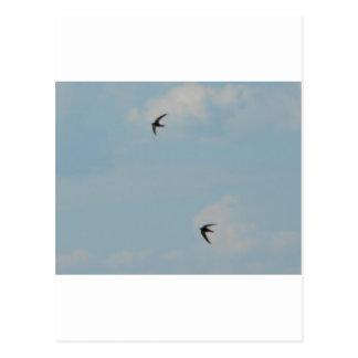 Swallows Birds Postcard