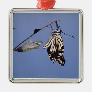 Swallowtail butterfly after metamorphosis Silver-Colored square decoration
