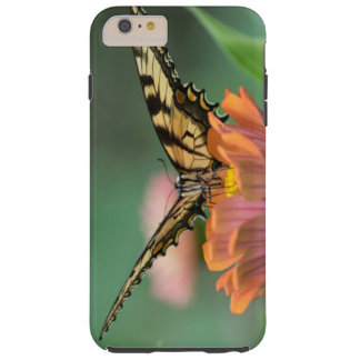Swallowtail Butterfly and the Zinnia Tough iPhone 6 Plus Case