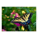 Swallowtail butterfly card