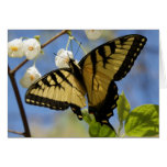 Swallowtail Butterfly Note Cards