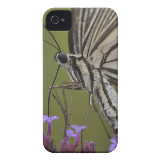 Swallowtail Butterfly on flower, Chiba iPhone 4 Case