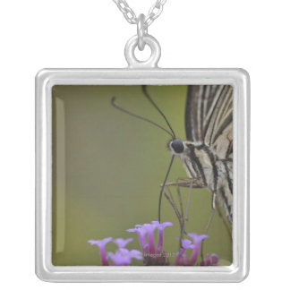 Swallowtail Butterfly on flower, Chiba Silver Plated Necklace