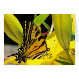 Swallowtail Butterfly on Lily Card