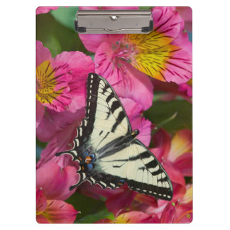 Swallowtail Butterfly on pink Clipboard