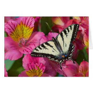 Swallowtail Butterfly on pink Greeting Card
