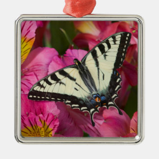 Swallowtail Butterfly on pink Silver-Colored Square Decoration