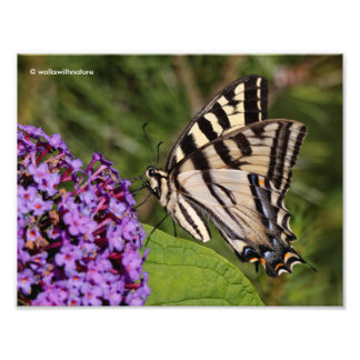 Swallowtail Butterfly on the Butterfly Bush Photographic Print