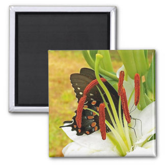 Swallowtail Butterfly White Lily  Magnet