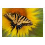 Swallowtail In Motion , CARD