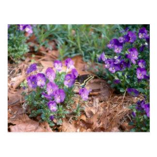 Swallowtail & Viola Postcard