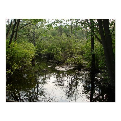 Swamp Beauty Post Card