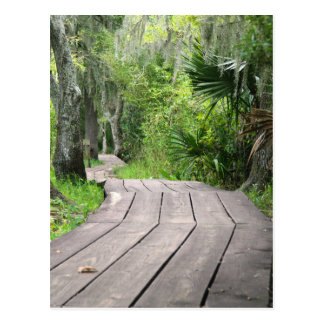 Swamp boardwalk postcard