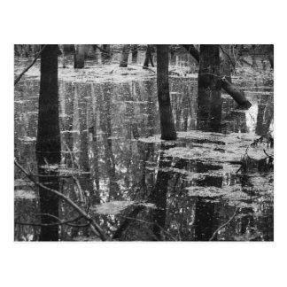 Swamp BW Postcard