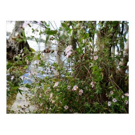 Swamp Flowers Post Cards
