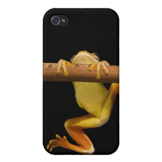 Swamp frog (Limnonectes Leytensis) iPhone 4/4S Cover