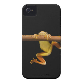 Swamp frog (Limnonectes Leytensis) iPhone 4 Cases