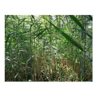 swamp grass postcard