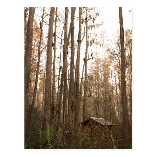 Swamp Hut Postcards