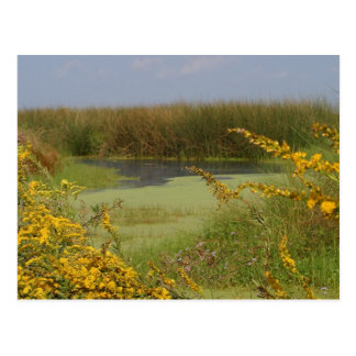 Swamp In Louisiana Postcard