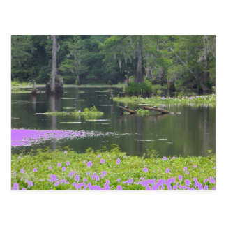 Swamp in purple postcard
