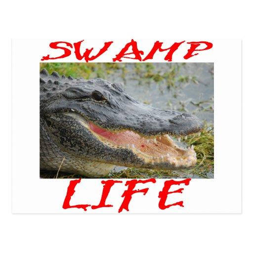 Swamp Life Alligator #002 Post Cards
