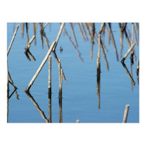 Swamp Post Card