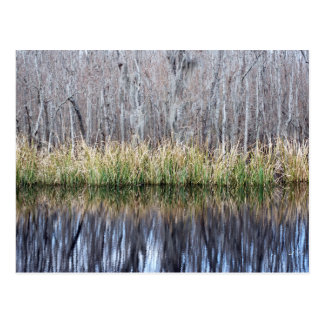 Swamp Reflection Post Card