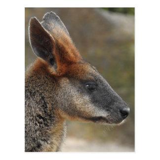 Swamp Wallaby Postcard