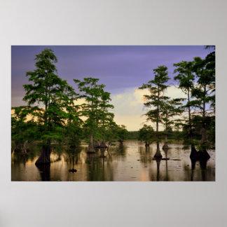Swampland Print