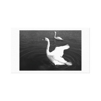 Swan 3 stretched canvas prints