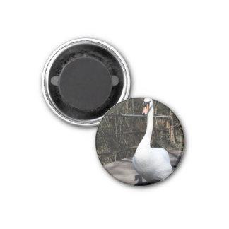 Swan 3 Cm Round Magnet