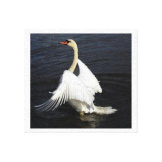 Swan 4 canvas print