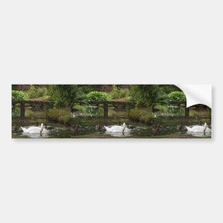 Swan And Ducks On Lake In Mount Stewart Gardens Bumper Stickers