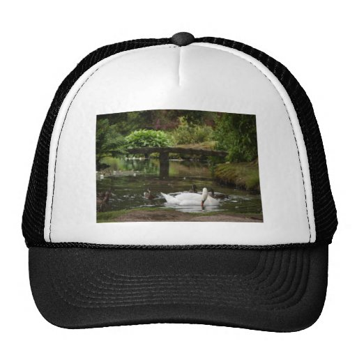 Swan And Ducks On Lake In Mount Stewart Gardens Mesh Hats
