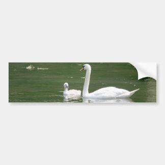 Swan and her Cygnet Bumper Sticker