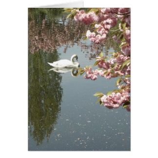 swan and pink blossoms greeting card