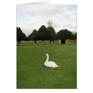 Swan at Hampton Court Palace, UK Card