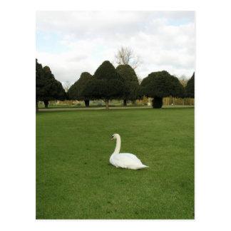 Swan at Hampton Court Palace, UK Postcard