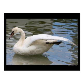 Swan Balance Postcard
